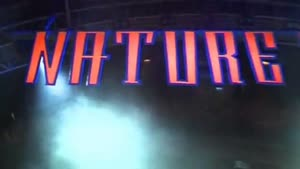 Nature One 2008 TRAILER / Best Quality here!