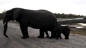 Baby elephant scares itself
