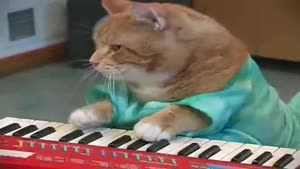 Keyboard cat is back!