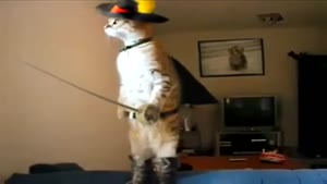 Standing Musketeer Cat