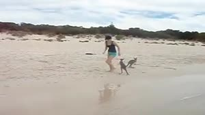 Baby Kangaroos at the Beach