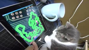 iPad: Luxurious Cat Toy