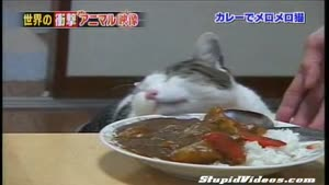 Cat loves Indian Food
