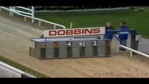 Greyhound racing FAIL!