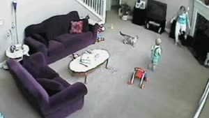 Cats Attack Babysitter