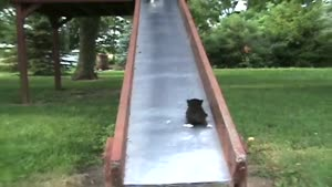 Cute Kittens On The Slide