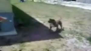 Dog does backflip