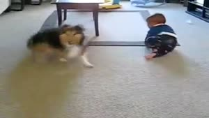 Family Dog Plays With Baby