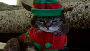 Tigger And His Christmas Costume