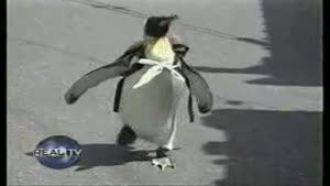 The Pet Penguin