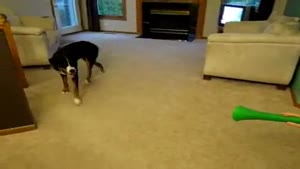 Dog Pisses On Vuvuzela