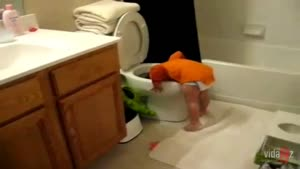 Thirsty Baby Drinks Out Of Toilet
