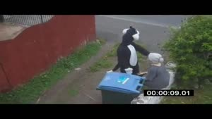 Cat Throws Old Woman Into Garbage Can
