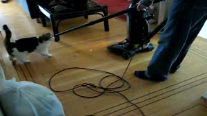 Cat Loves Vacuum Cleaner