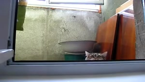 Sneaky Peeping Cat Is Watching You