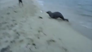 Seal Steals Fish From Fisherman
