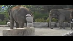Climbing an Elephant Fail