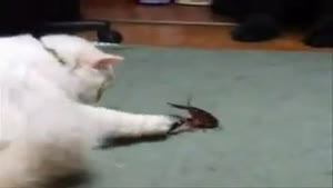 Lobster vs. Cat