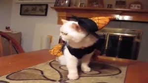 Cat Dressed Up As A Witch