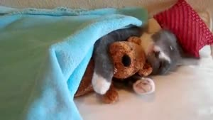 Cat And His Teddy Bear