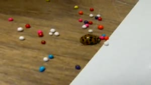 Ladybug Plays With Sprinkles