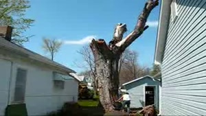 Tree Removal FAIL