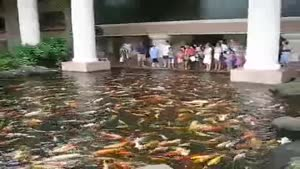Feeding the Fishes