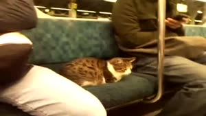 Cat In The Subway
