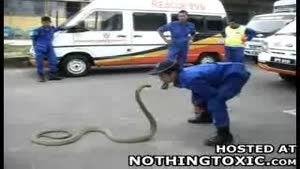 Animal Control Tries To Calm Down Cobra