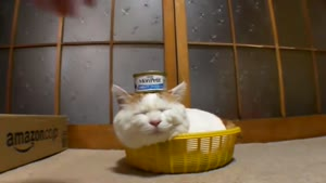 Sleeping Cat Balances Tuna On His Head