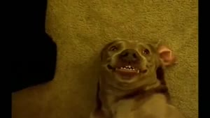 Farting Dog Pulls A Funny Face