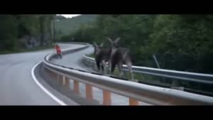 Two Moose Hit The Road