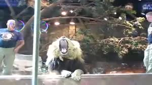 Lion Goes After Zoo Employee