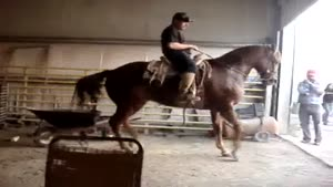 Awesome Dancing Horse