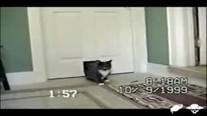 What's That Coming Through The Cat Flap?