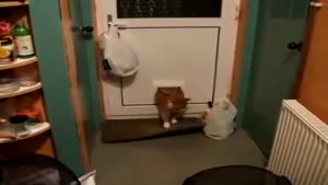 Cat Flap Fail