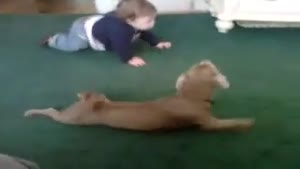 Baby And Dog Crawl Together