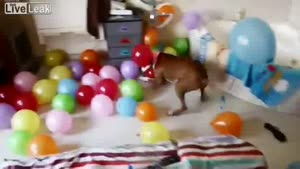 Dog's Best Birthday Party Ever