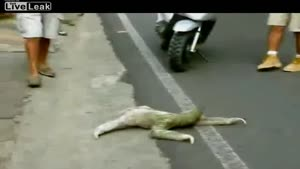 Sloth Tries To Cross The Road