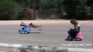 A Race Between Men And Dog
