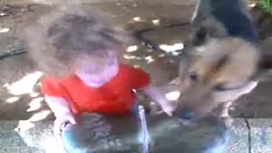 Thirsty Toddler Vs Thirsty Dog