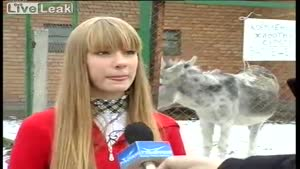 Donkey Farts During Interview