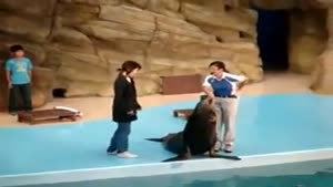 Very Naughty Sea Lion