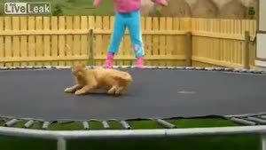 Little Girl Enjoys Trampoline