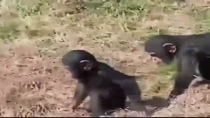 Jealous Monkey Pushes His Friend In The Water