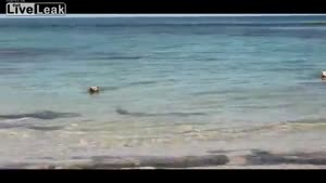 Dog Chases Sharks Under Water