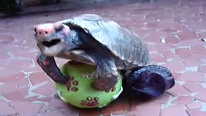 Turtle Getting It On With A Ball