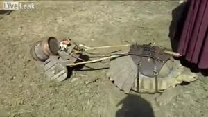Turtle Pulls Trailer With A Barrel