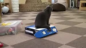 Cat Locks His Friend In A box