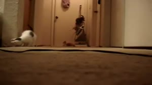 Kittens Vs The Vacuum Cleaner